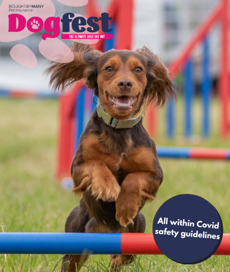 Dogfest mobile image