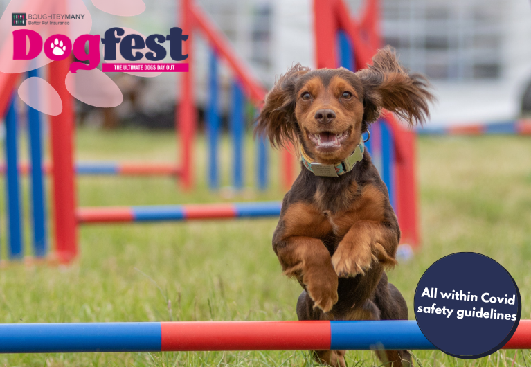 Dogfest tablet image