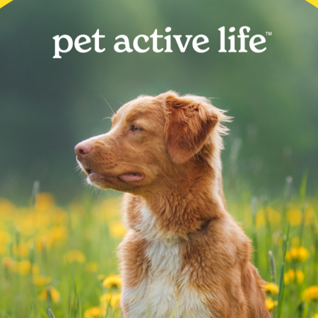 What to expect from Pet Active Life? image