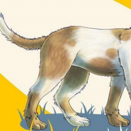 How to read your dog's body language: advice from Dogs Trust image