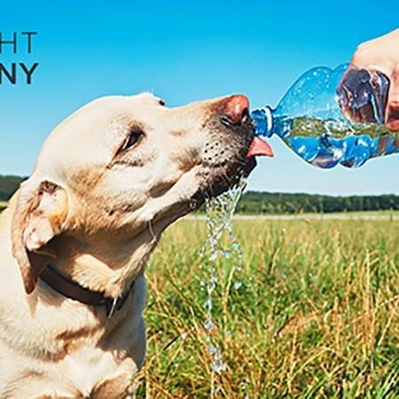 Keeping your dogs cool in the Summer: Advice from Bought by Many image