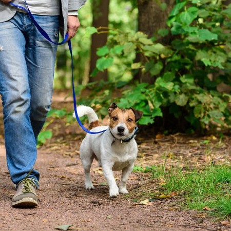 Walking dogs in woods – tips from the Woodland Trust image