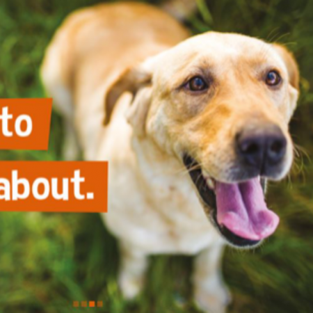 The Importance of Dog Treats – YAKERS image