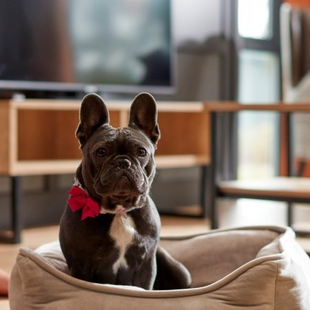 Win a UK holiday with Darwin Escapes, exclusively at DogFest North! image