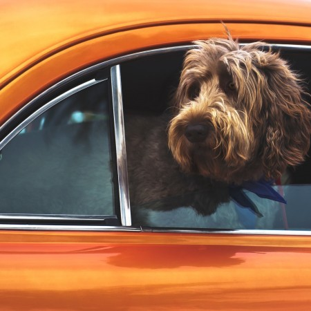 Dogs in Hot Cars - Not long is too long image
