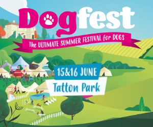 DogFest North advert