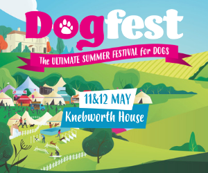 DogFest South advert