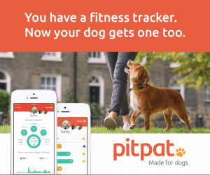 PitPat advert