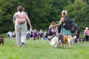 great dog walk at dogfest