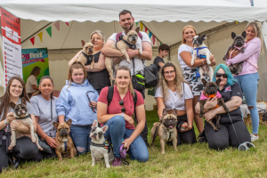 French Bulldog Breed Meet Up at DogFest