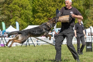 conquest k9 at dogfest