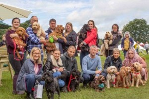 Cockapoo Breed Meet Up at DogFest