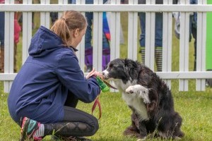 border collie at dogfest