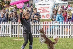 dog dancing at dogfest
