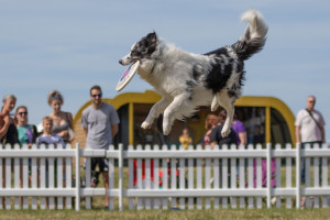 dog performance at dogfest