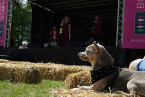 live stage at dogfest