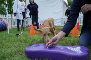 Puppy Academy at DogFest