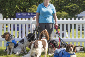 Woman with seven spaniels