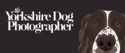 image for The Yorkshire Dog Photographer